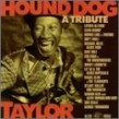 Tribute To Hound Dog Taylor- Ronnie Earl- Son Seals-  Dave Hole